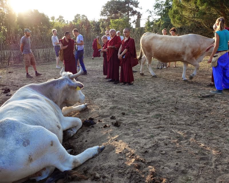Lama Zopa Rinpoche blessing animals at the Fattoria della Pace Ippoasi, an animal sanctuary run by young vegans near ILTK, Italy, June 2014. Photo by Ven. Roger Kunsang.