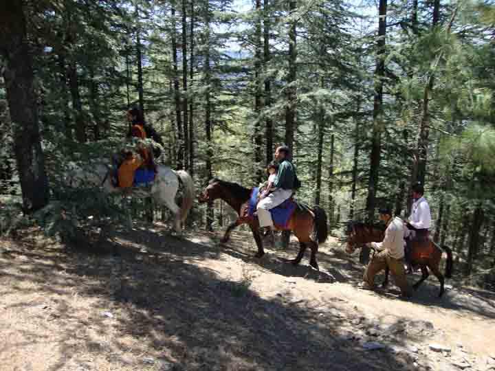 Horse riding at Naldehra