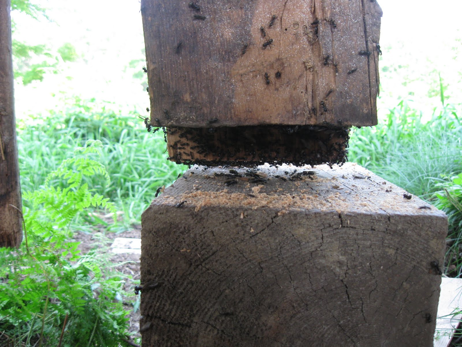 Although this post appeared to be intact at first glance, it was full of carpenter ants.