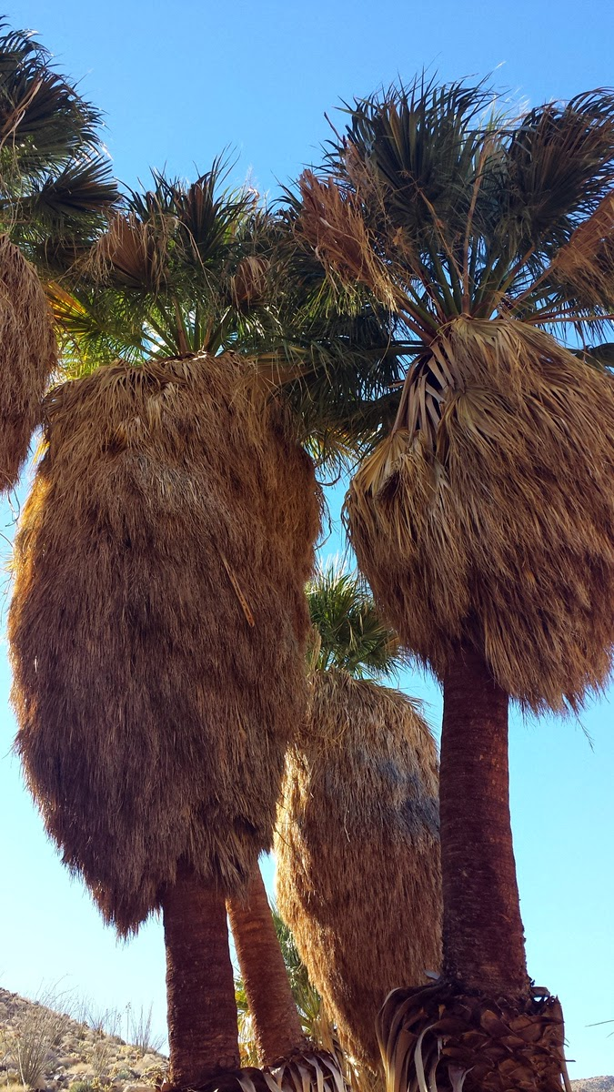 The only sound we heard was the rustling of the palms as the warm desert breeze funneled thru the canyon.