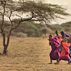 Masai women gathering firewood on the plains