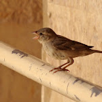 エジプトにいた鳥
