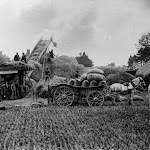 Threshing in 1935. Fred Jones and Ted Keep standing under machine. In field now part of Upton Fruit Farm. From Mrs Keep's album.