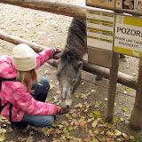 POZOR! Poník umí také kousnout!