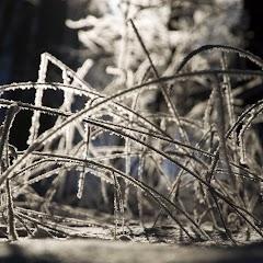 Zimní větvičky 2010