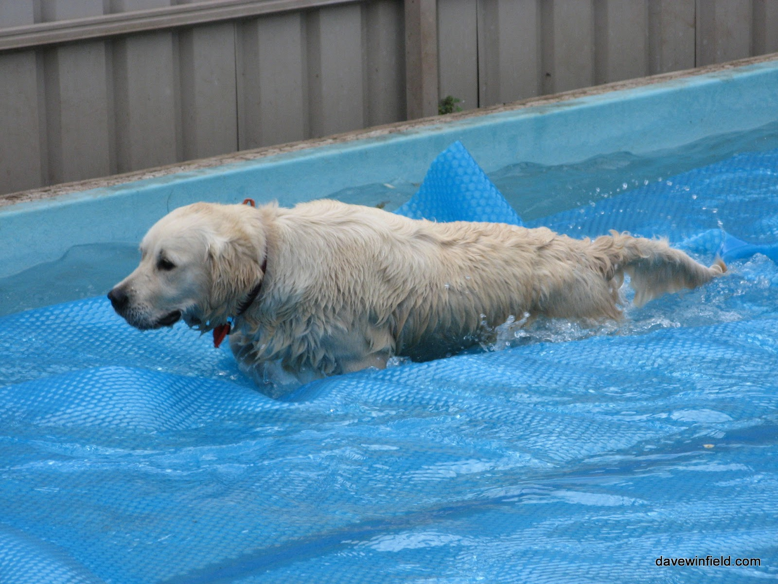 NOTHING kept Jess out of the pool when she was younger. The first time she did this I was terrified, but she just walked across it fine..