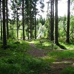 Takové pěkné tábořiště v lese...