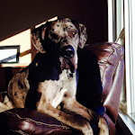 Handsome man. Dognified.