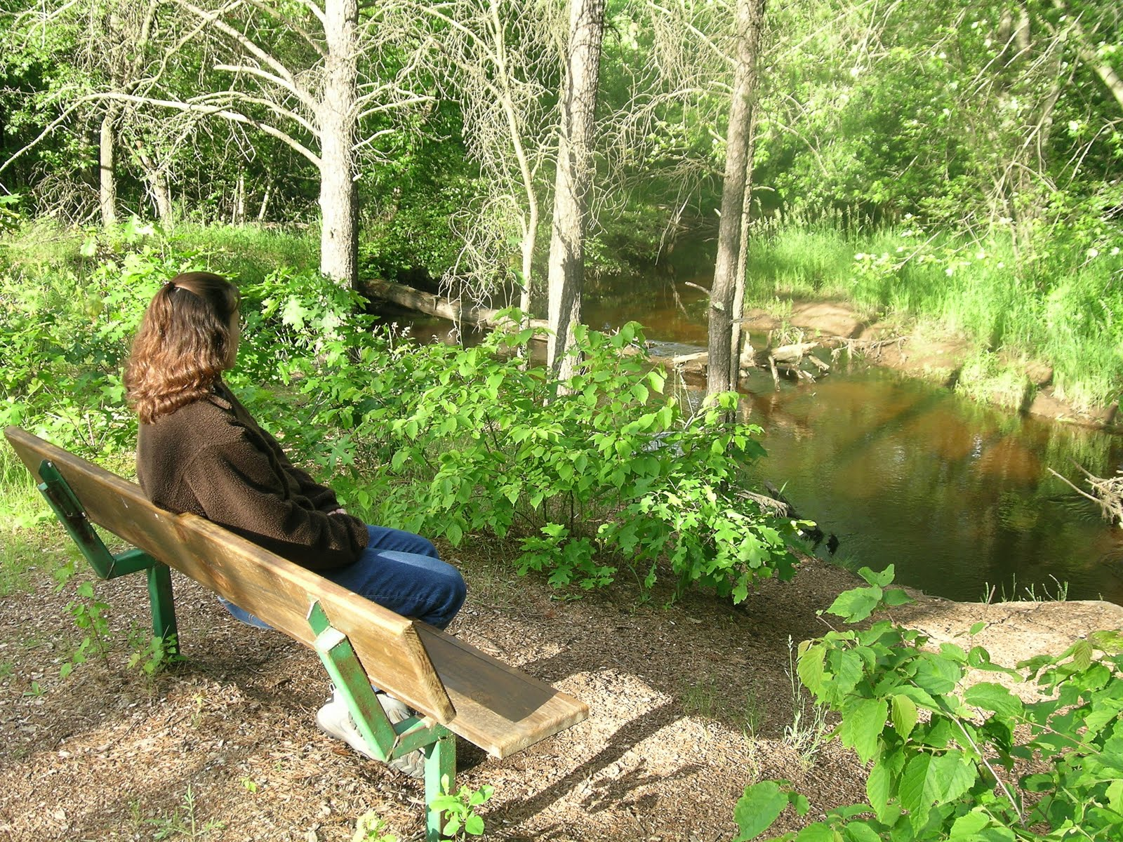 Bench by the Plover River. Photo by Jim Buchholz