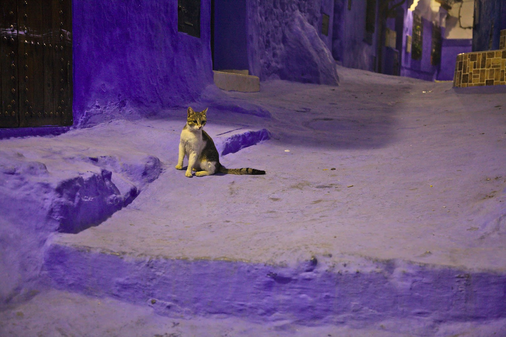 Blue city cat