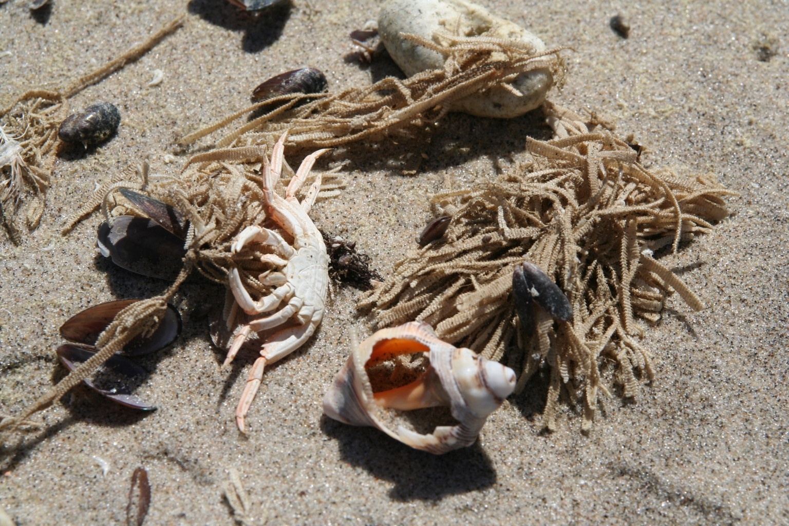 Sea stuff