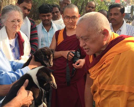 Lama Zopa Rinpoche blessing puppies at MAITRI Institute, Bodhgaya, India, February 2015. Photo by Ven. Roger Kunsang.