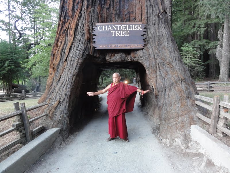 Chandelier Tree in Leggett