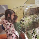 Návštěva muzea betlémů v Třebechovicích pod Orebem