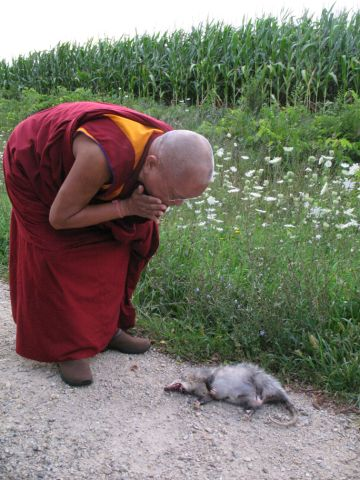 Lama Zopa Rinpoche blessing an animal that has been hit on the side of the road, WA, USA