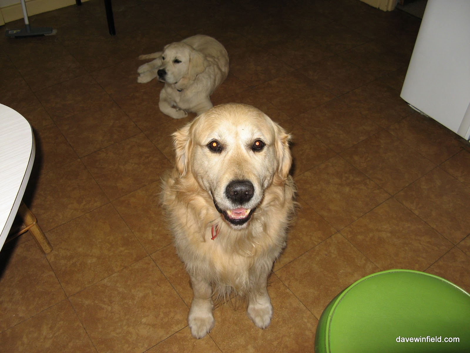 Jack in the foreground - he was ALWAYS ready to pose for a photo! And Jess in the background.
