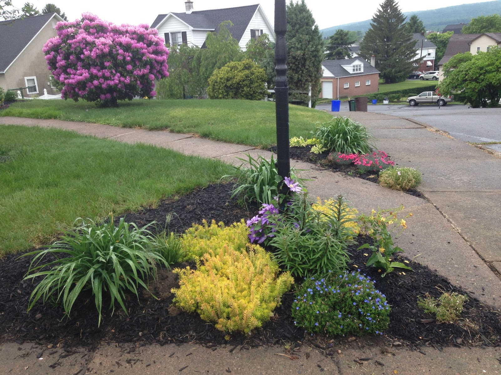 A few weeks later you can see my daylilies about to pop, and in the back some pink dianthus, another daylily, phlox, and some cool sedum. Rhododendron in the background