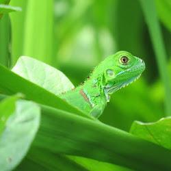 2012 - Costa Rica
