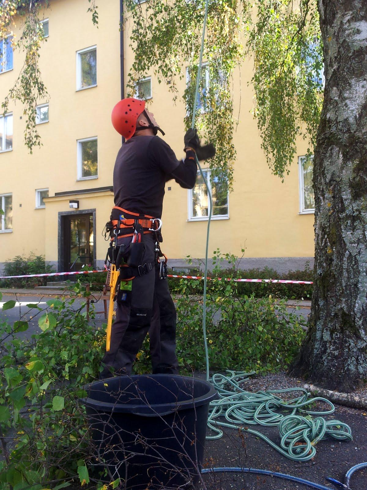 Att få repen på rätt plats inför jobb som kräver klättring är viktigt.