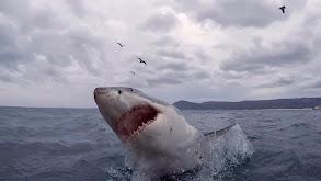 The Shark Bite State thumbnail