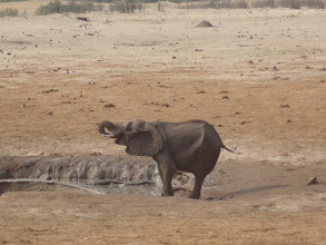 Photo: One small elephant isn't scared of the lioness.