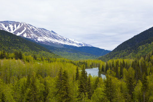 Juneau-woodlands.jpg - See the wild expanses of Juneau, Alaska, on your Regent Seven Seas cruise.