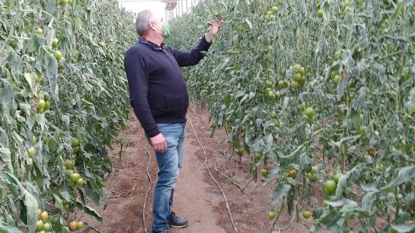 ASAJA recuerda la importancia realizar informes de daños para aquellas explotaciones que no cuenten con seguro de cosecha.