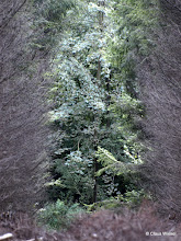 Photo: ...noch mehr Bäume
