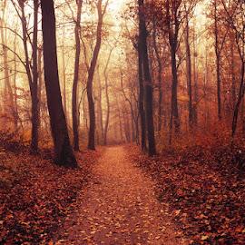 Autumn Walk LXXXV. by Zsolt Zsigmond - Landscapes Forests ( path, foliage, forest, fall, autumn, trees )