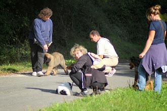 Photo: Slalom spécial chiens