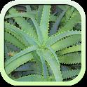 Лекарственные растения и травы icon