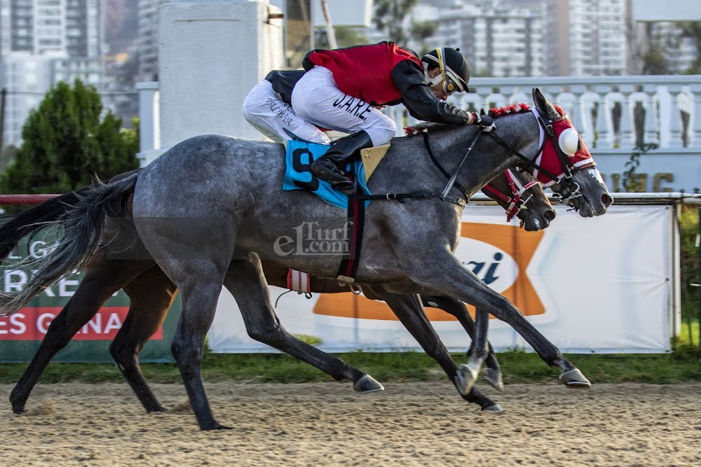 Shanghai Express (Shanghai Bobby) conquista Handicap (1100m-Arena-VSC).