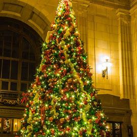 Christmas by Lisa Fitzthum - Public Holidays Christmas ( color, christmas tree, holiday, lights, presents )