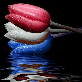 Dutch National Flag by Ad Spruijt - Digital Art Things (  )