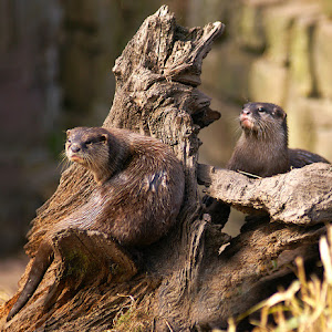 otter low res 003.jpg