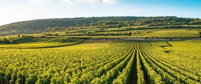 Посещение виноградников Бордо: когда лучше приезжать, где остановиться, как одеваться, как ездить. Винный гид по Бордо. Путеводитель по Бордо, виноградники Бордо, вино Бордо, вина Бордо, дегустация вина Бордо, посмотреть виноградники Бордо, посетить виноградники Бордо, сколько стоит виноградники Бордо, Бордо, Бордо Франция, гид по Бордо, гид по Франции, путеводитель по Франции, бордоские вина, Сент Эмильон