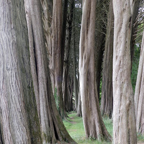 Trees at Ty Mawr by Cliff Oakley - Nature Up Close Trees & Bushes ( nature, tree, wales, wildlife, woodland, garden )