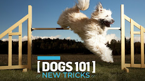 Dogs 101: New Tricks thumbnail