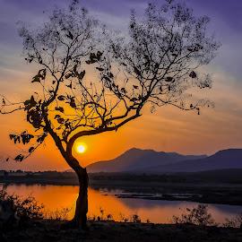 Standing Alone by Vipul Kotecha - Nature Up Close Trees & Bushes ( nature, sunset, tree, landscape,  )
