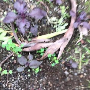 エスカレード  07yのカスタム事例画像 らいおんの子(RAT CREW famam)さんの2019年07月09日03:45の投稿