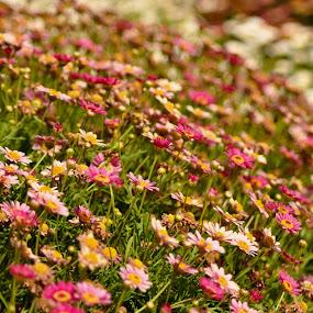 by Rodolfo Alar - Nature Up Close Gardens & Produce