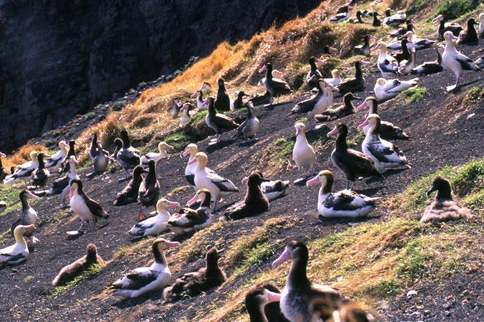 Seabirds on rocky cliff.