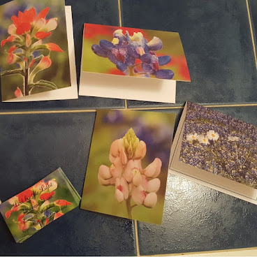 Texas Wildflower Note Cards