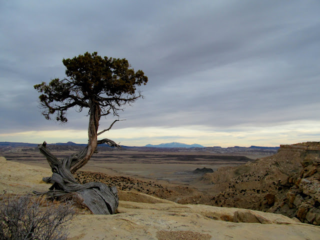 Twisted juniper with a view of the Henry Mountains