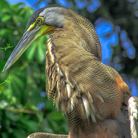 Fishing by Lyn Simuns - Animals Birds ( nature up close, costa rica, jungle, birds, heron,  )