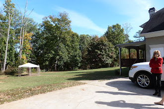 Photo: The gazebo and dead trees will be removed