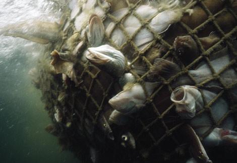 Photo: Pesca Golfo Maine EUA National Geographic Society