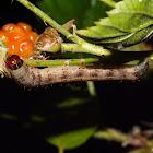 Moth Larva Feeding