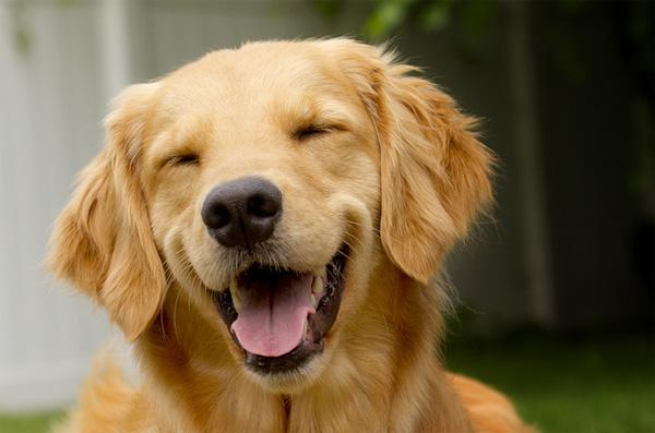 Αποτέλεσμα εικόνας για happy dog