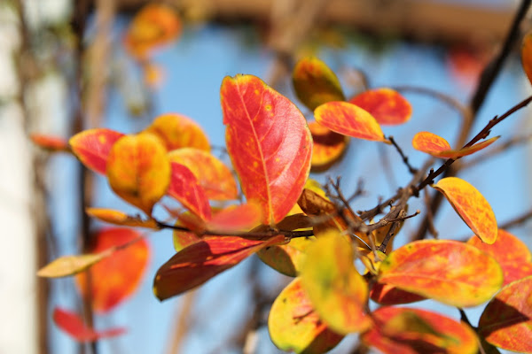 I colori della stagione di Federica Patalano